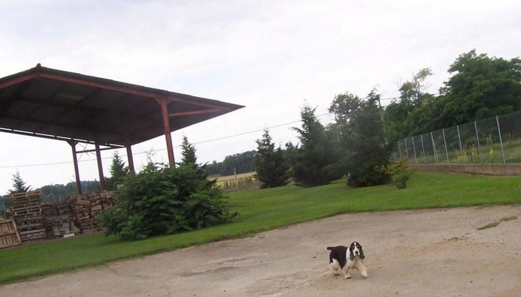 etang-des-chalands-pension-chien-canine-allier-saint-pourcain-gardiennage-2