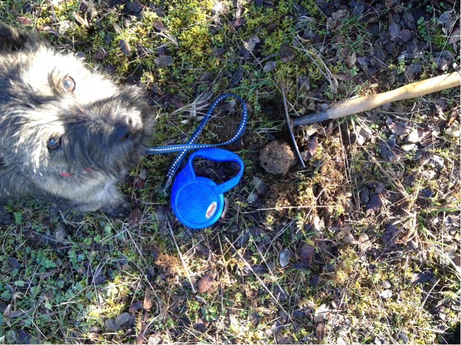 elevage-etang-des-chalands-cairn-terrier-truffier